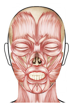 Facial Muscles for Learning Botox Injections at Texas Institute of Dermatology